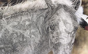 Judy Larson-RED HORSE