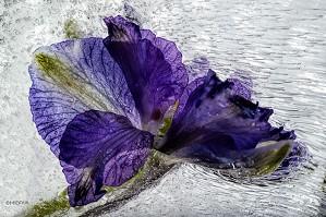 Mo Devlin-Purple Streams OPEN EDITION