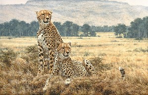 Simon Combes-Cheetah Pair