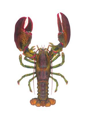 Flick Ford-World Record Lobster Masterwork Canvas Edition