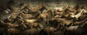 Norm Clasen-Long Herd By Norm Clasen Giclee On Canvas  Grande Edition