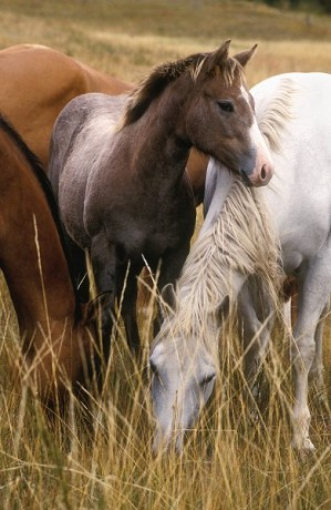 Norm Clasen-The Yearling By Norm Clasen Giclee On Canvas  Grande Edition