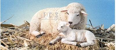 Ebony Visions_The Nativity Sheep With Lamb